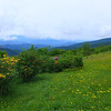 Roan Mountain's Beauty!