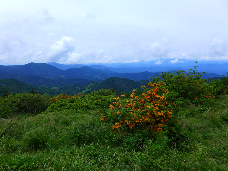 Flame Azalea on Engine Gap on Roan Mountain.  Views into North Carolina beyond.