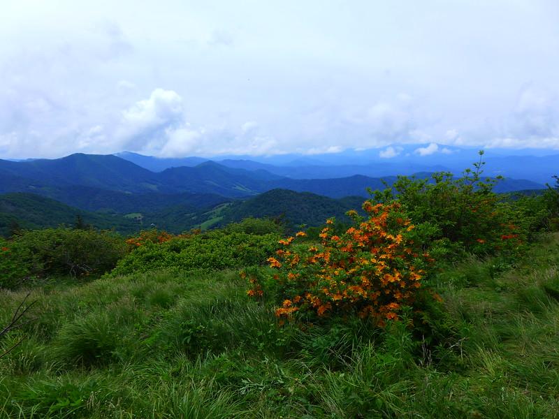 Flame Azalea on Engine Gap on Roan Mountain.  Views into North Carolina beyond.