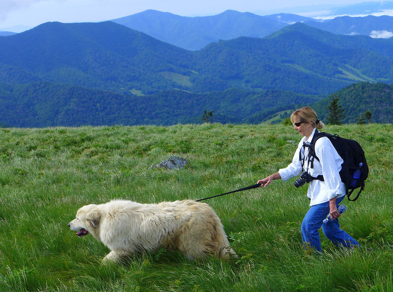 "Linda and Baxter, as they head up Roan Mountain to the area where the goats and dogs will live for the summer.  <b><u><a href=""http://baatany.org/"">Please see this webpage</a></u></b> for more info."