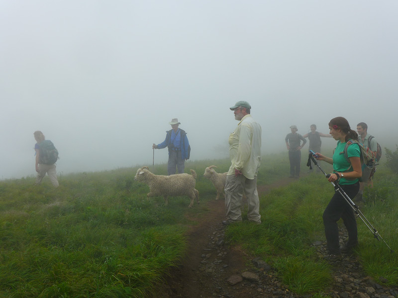 Jamey (center) and volunteers near Jane Bald