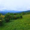 Roan Mountain's Beauty