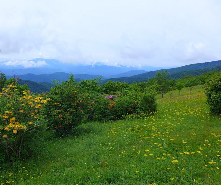 Roan Mountain's Beauty