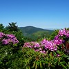 View of Round Bald and Roan High Knob