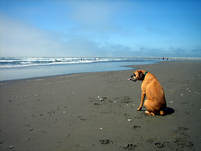 Contemplating dog life at the beach