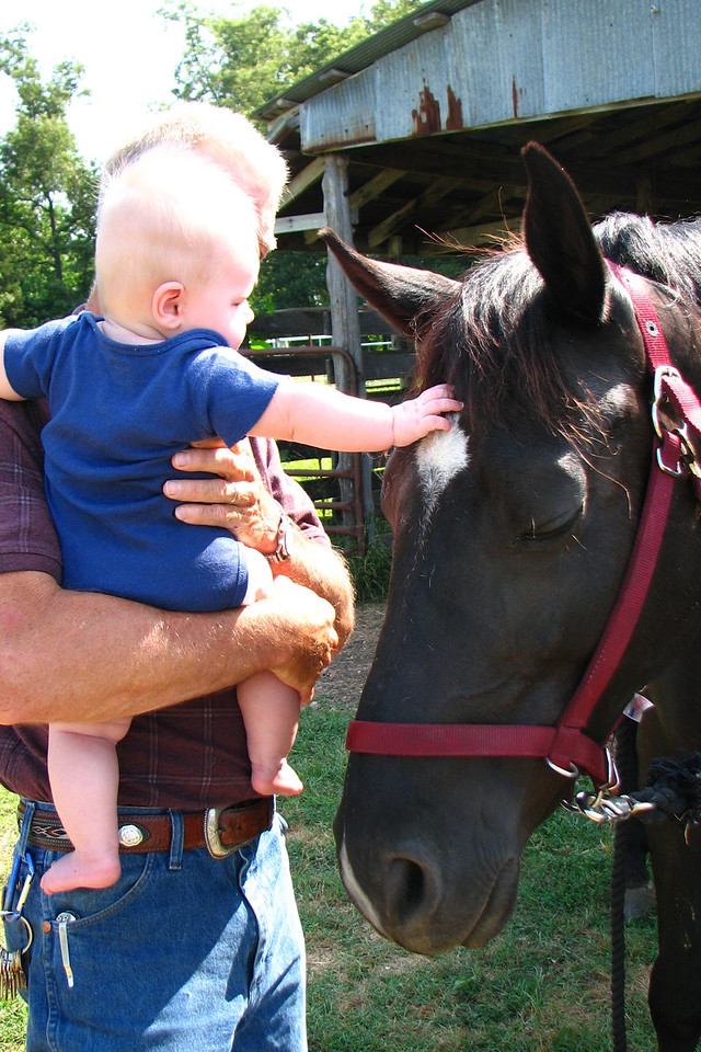 Petting Maverick the horse