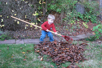 zach was pretty sure that my rake was a good size for him