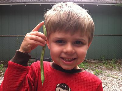 green bean hunter