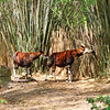 Going on a Kilimanjaro Safari at Animal Kingdom.