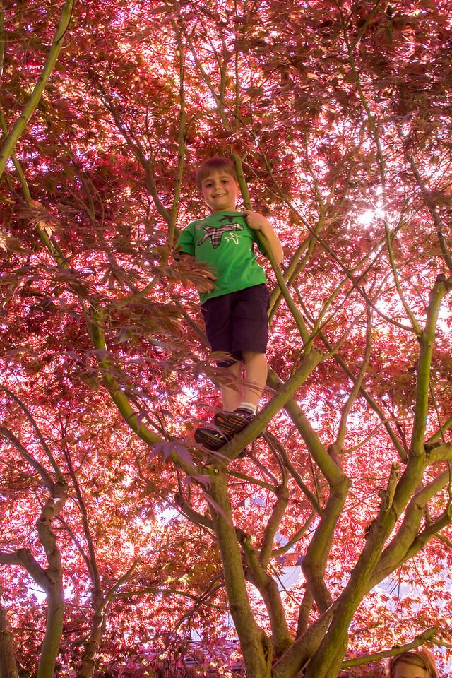 Zach's new skill of climbing trees