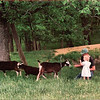 Robin-Kali-Goats 5-11-1992<br /> Feeding the goats, leaves.