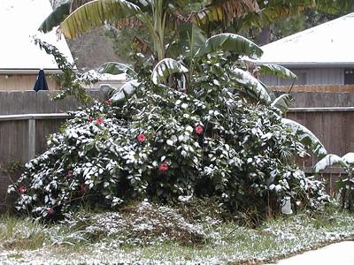 2004-12\12-25 Christmas