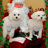 Belle and Tex with Santa 2010