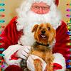 Scamper and Santa 2010