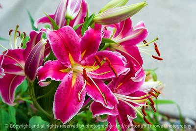 015-flower_lily-ankeny-13jul21-12x08-008-400-3761