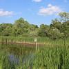 Pond and Bird House