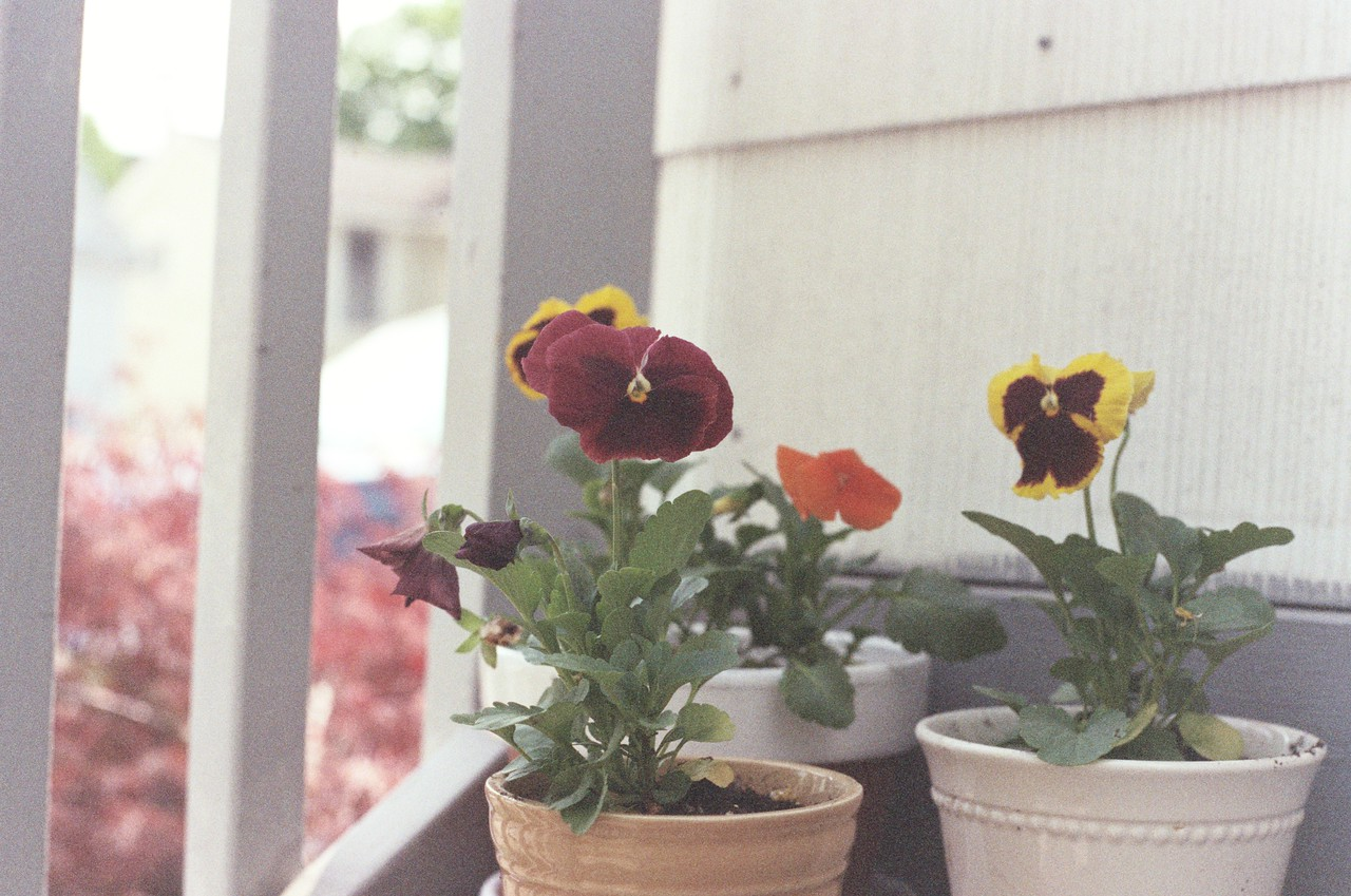 Pansies on the porch!
