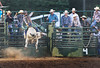 Coming out of the Chute Screaming - Rock Bottom Bull Riding - Photo by Pat Bonish