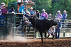 Lights Out - Rock Bottom Bull Riding - Photo by Pat Bonish