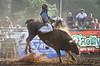 Afternoon Halo - Bull Riding at Rock Bottom - Photo by Pat Bonish