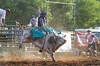 Bull Riding at the Rock Bottom Weekend - Photo by Pat Bonish
