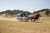 Team USA takes the Win - Rock Bottom Chuck Wagon Races 2012 - Photo by Pat Bonish