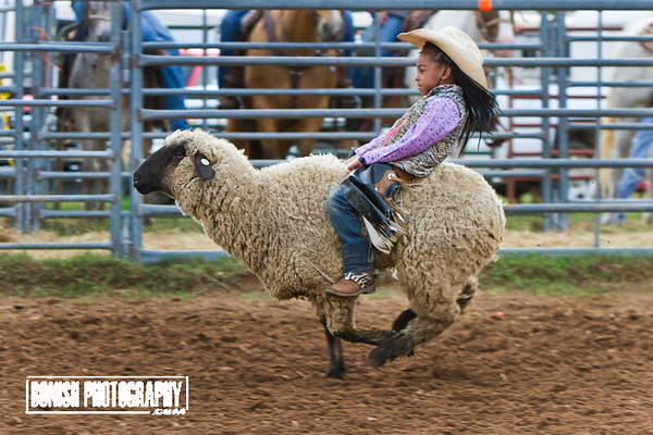 Rock Bottom Mutton Busting 2016