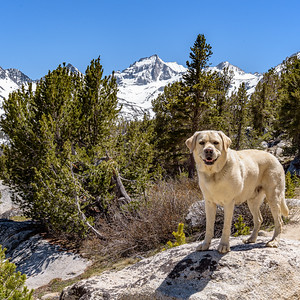 Jock high in the Sierras