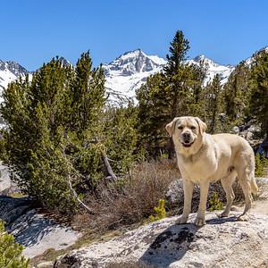 Jock high in the Sierras