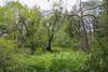 Botanical Garden...