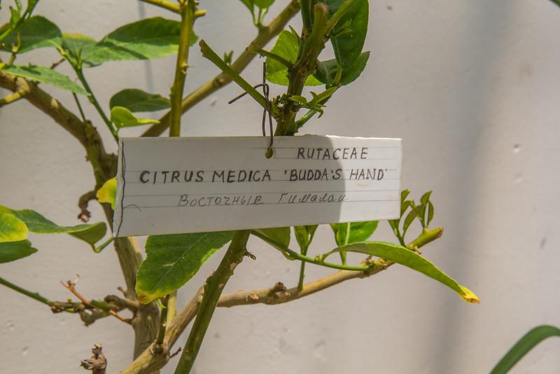Citris medica