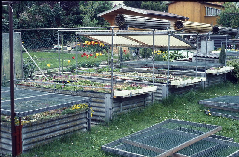Franz nursery in the backyard of his home (Garden of Franz Hadacek, Vienna)