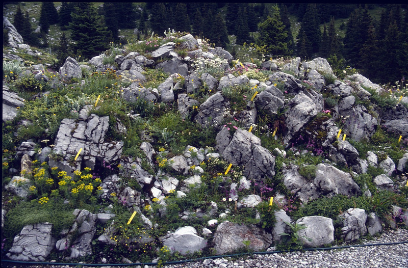Rockgarden (Botanic Garden near the Lindauer hutte OAV 1744m.)