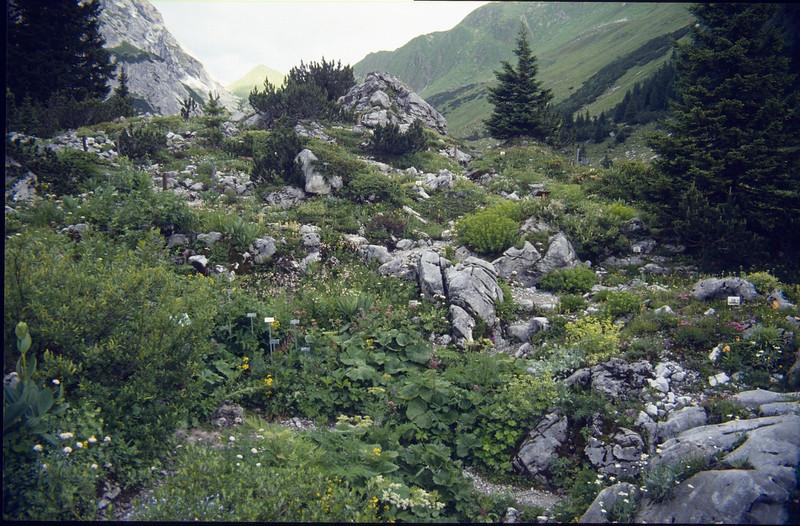 Rockgarden of limestone (Botanic Garden near the Lindauer hutte OAV 1744m.)