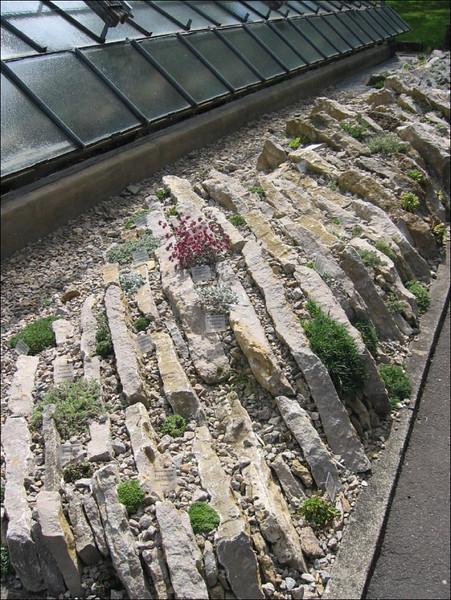 crevice garden, Botanische Garten, Julius von Sachs Institut, Wurzburg