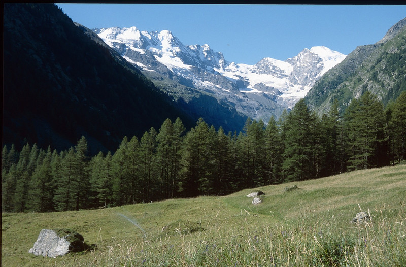 The Paradisia Alpine Botanic Garden and Gran Paradiso massive