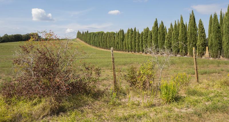 Cypressus sempervirens avenue