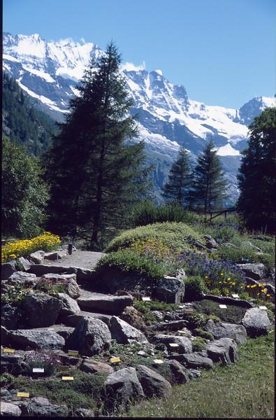 The Paradisia Alpine Botanic Garden