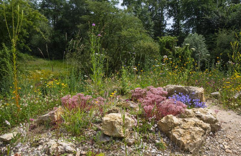 Summerflora of a dry habitat on the summit