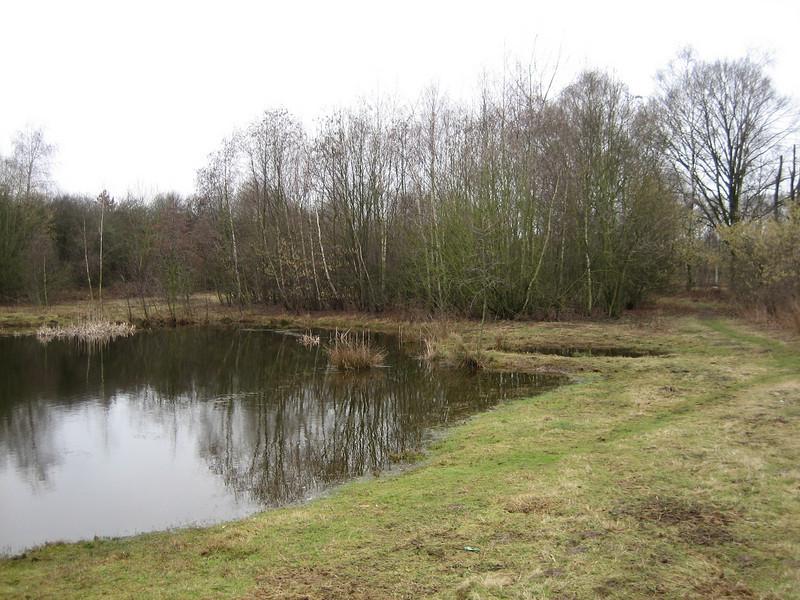 Large pond, Eco-park February 2011