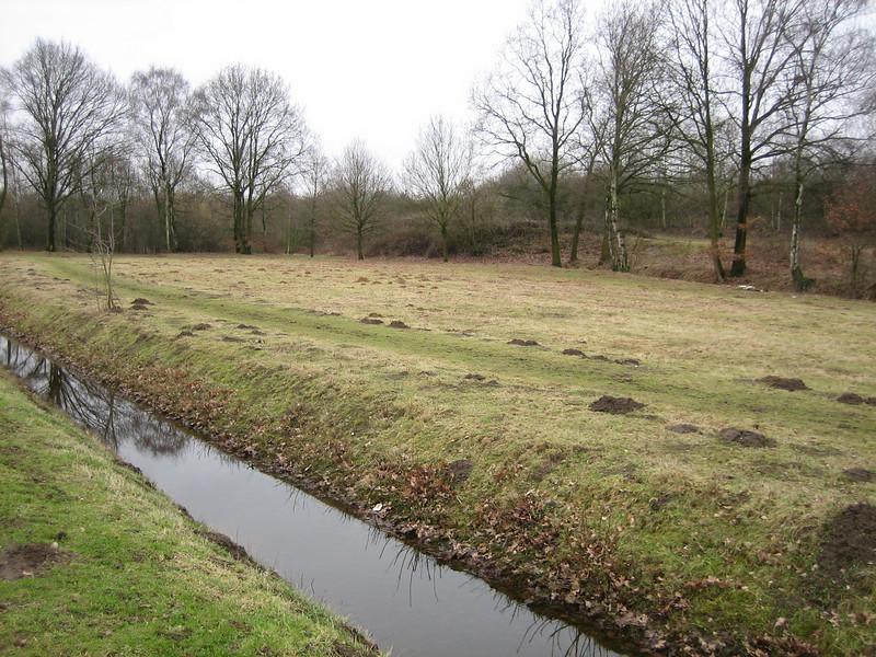 Meadow, Eco-park, February 2011