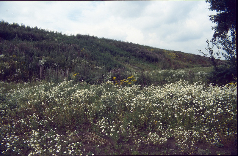 meadow with pioneer plants