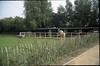 pony-stable
