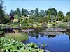 Pond garden (Ada Hofman)
