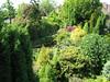woodland garden (Garden Theo v.d. Zanden, Eindhoven)