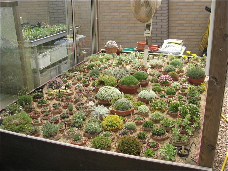 Alpine house (Garden Ab v. Dooremolen, Best)