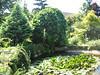 pond (Garden Theo v.d. Zanden, Eindhoven)