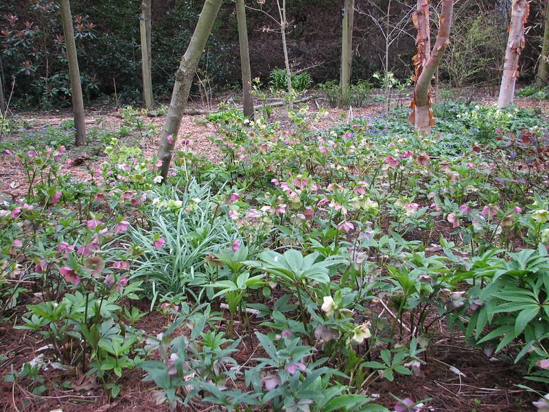 woodlandgarden (Garden, Sjaak de Groot, De Zilk, Southern Holland)