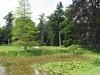 pond of house Verwolde, Achterhoek, East Netherland (habitat of Nuphar lutea, gele plomp)