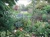 back garden (Garden Harrie en Ton de Vries, Valkenswaard)